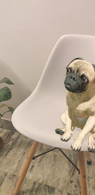 Google Pug 3D