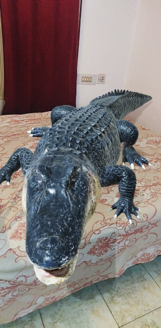 Google 3D Alligator