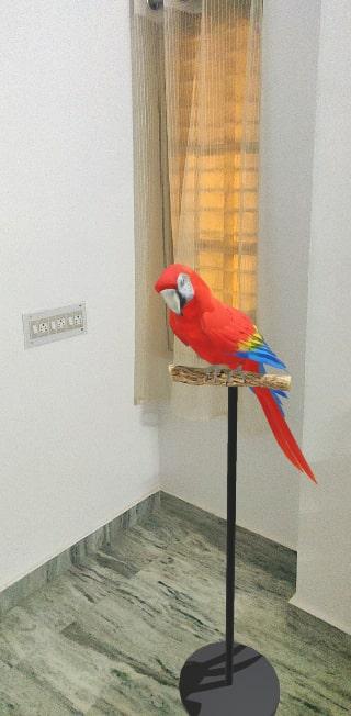 Google Macaw 3D