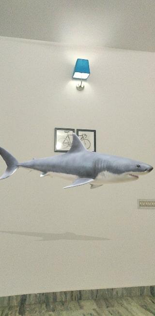 Google Shark 3D