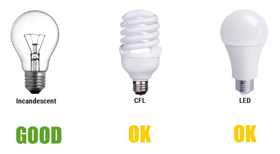 Incandescent vs CFL vs LED: Good For Eyes